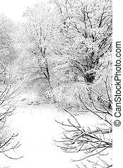 coperto, neve, alberi inverno, scenario