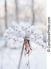 coperto, pianta, neve