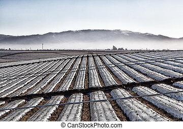 coperto, sheeting, campo agricolo, plastica