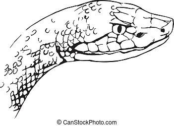 Agkistrodon contortrix - the copperhead snake