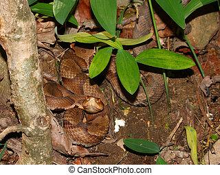 Copperhead Snake Alabama Wildlife
