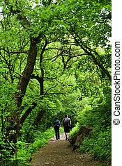 coppia camminando, in, il, foresta