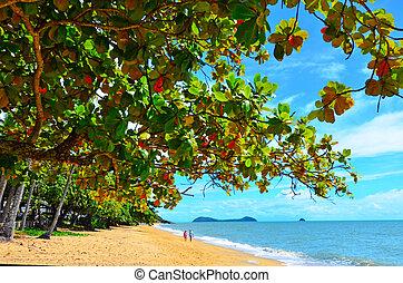coppia, camminare, su, trinità, spiaggia, appresso, cairns, queensland, australia