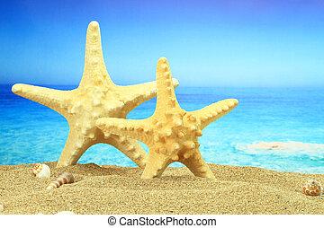 coppia, di, starfish, spiaggia