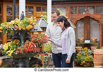 coppia felice, guardando, pianta rossa