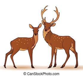 coppia, isolato, deers