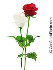 coppia, roses., bianco rosso, &