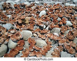 Copra from coconut on the stone sea coast in Dominica island