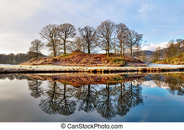 Copse of bare deciduous trees in winter reflected in the calm water of a lake on a frosty morning at Elterwater, Langdale, English Lake District