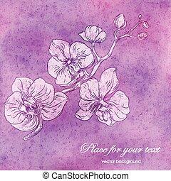 copy-space, disegno, ramo, orchidea