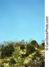 copy space scrubland - Scrubland hillside with bright blue ...