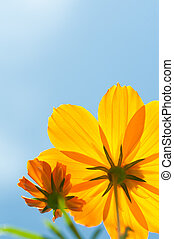 copy space vivid yellow flower
