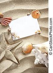 copyspace, espace vide, été, etoile mer, sable, coquilles