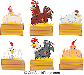 coq, paille, nid, poule