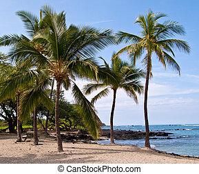 coqueiros, ligado, havaiano, praia