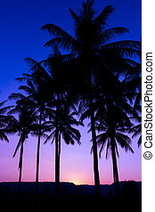 coqueiros, silueta, com, pôr do sol