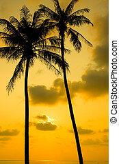 coqueiros, silueta, em, pôr do sol