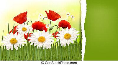coquelicots, printemps, arrière-plan rouge