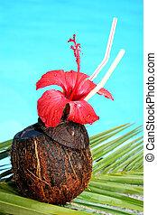 coquetel tropical
