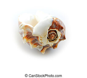 coquille, 2, mer
