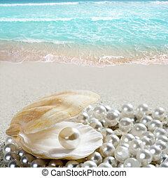 coquille, antilles, exotique, perle, sable, plage blanche