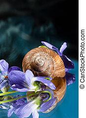 coquille, autour de, escargot, pourpre, il, fleurs