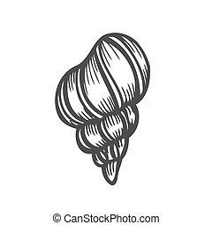 Illustrations de bivalve 564 images clip art et - Coquille saint jacques dessin ...