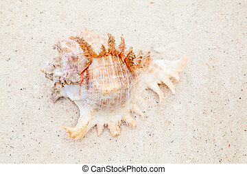 coquille, mer