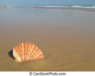 coquille plage, mer