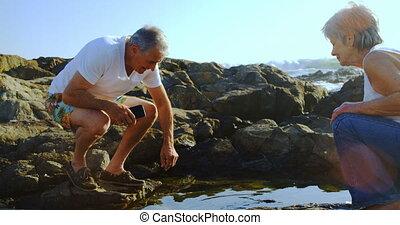 coquille, prendre, 4k, mer, personne agee, hors côté, homme