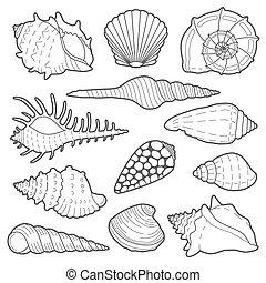 coquilles, vecteur, ensemble, mer, icône