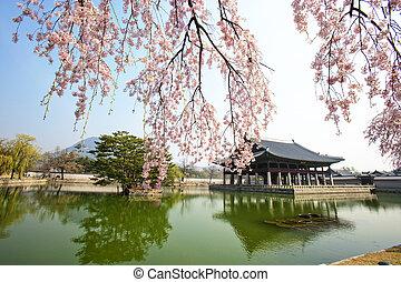 corée, palais, printemps, gyeongbokgung, paysage, sud