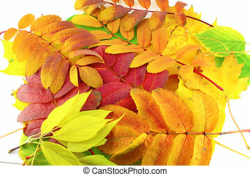 cor, abstratos, folhas, fundo