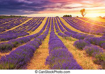 cor campo alfazema, pôr do sol, bonito