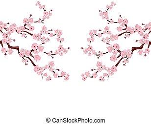 cor-de-rosa, ambos, ramos, buds., cereja, isolado, ilustração, localizado, sides., experiência., flores brancas, sakura