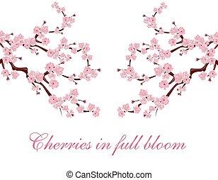 cor-de-rosa, ambos, ramos, localizado, isolado, ilustração, experiência., flowers., sides., sakura, branca, inscription.