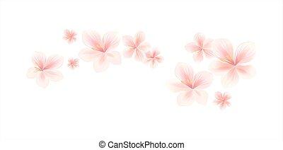 cor-de-rosa, apple-tree, pêssego, border., luz, voando, isolado, experiência., flowers., vetorial, cereja, blossom., flores brancas