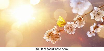 cor-de-rosa, arte, primavera, blossom., árvore, fundo, florescer, borda, ou
