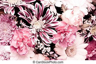cor-de-rosa, aster, fundo