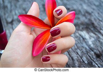 cor-de-rosa, bonito, flor, mão feminina, plumeria, manicure