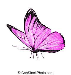cor-de-rosa, branca, borboleta