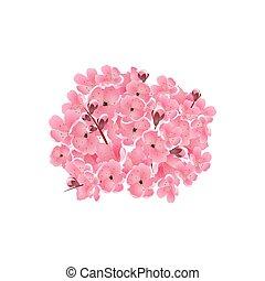 cor-de-rosa, buquet, cereja, isolado, ilustração, sakura., experiência., flowers., branca