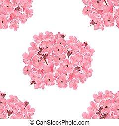 cor-de-rosa, buquet, cereja, seamless, ilustração, isolado, sakura., experiência., flowers., white.