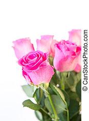 cor-de-rosa, buquet, cima fim, rosas