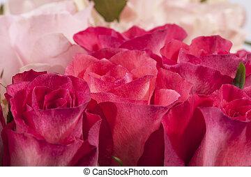 cor-de-rosa, buquet, cima, rosas, fim