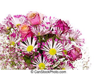 cor-de-rosa, buquet, flores, isolado, white.