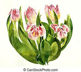 cor-de-rosa, buquet, pintura aquarela, tulips