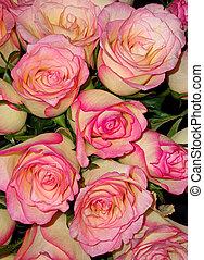 cor-de-rosa, buquet, rosas