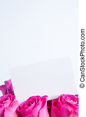 cor-de-rosa, buquet, vazio, cartão, rosas
