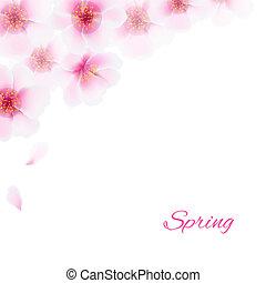 cor-de-rosa, cereja, flores, borda